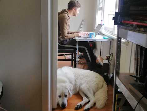 Man working on computer with fluffy dog at his feet