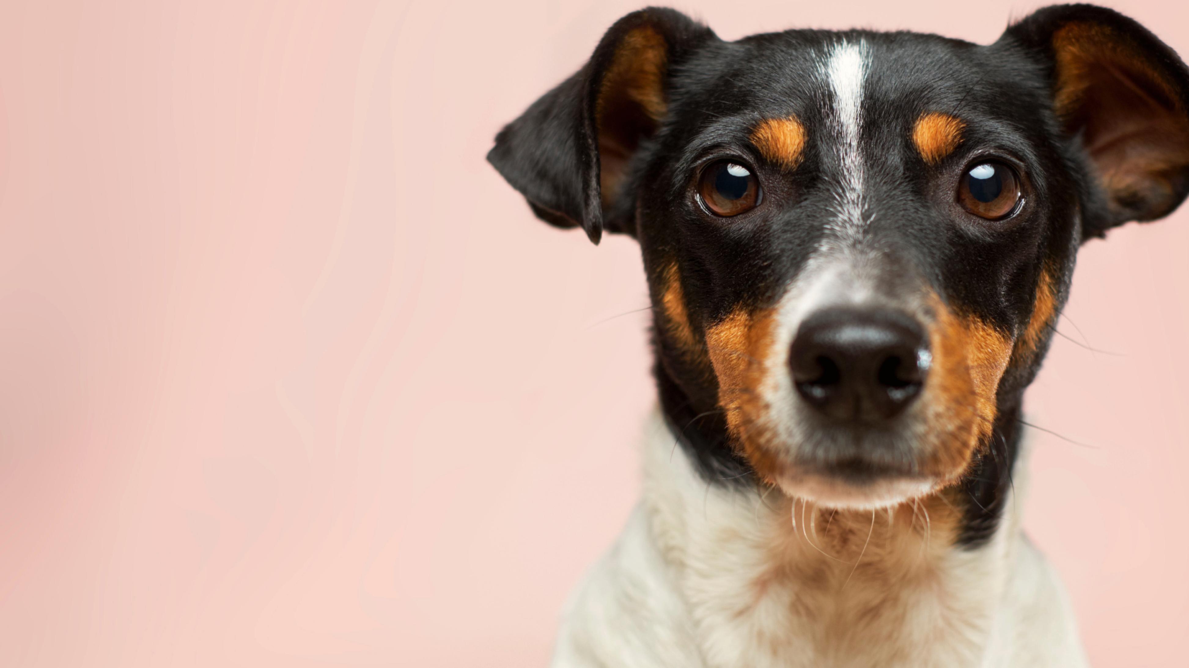 Pet Culture case study hero image