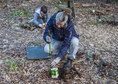 Sarah planting a tree