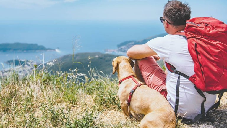 Man and a dog looking out over a seaside town